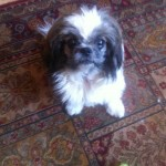 Ralphie  4 years old